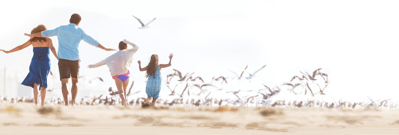 Seagulls Flocking to the family